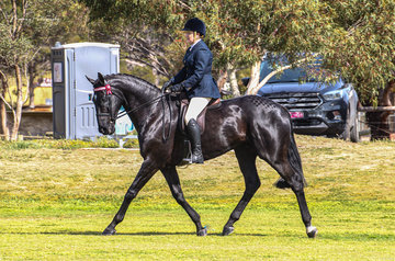 Melissa Harding made a great return to the show ring in the open hack ring rather than her usual appearance in the hunter ring with her new thoroughbred Matrix. The show was well supported by several of Melissa's talented junior riders who were excited to be out competing again.