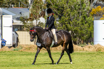 Now competing successfully off the lead Maison Hunt rode her delightful current EA National Lead rein pony to win the First Ridden show pony, open pony class and Champion Small pony with Earlsley Park Bo Peep