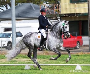 Andrew air – Andrew Buckley on the imported PRE stallion Joselito de Arroyo in the advanced.