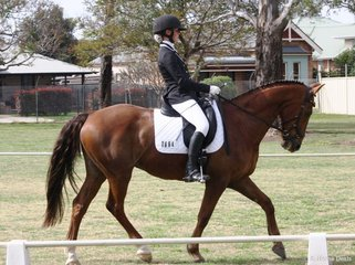 Annika Ash on her new lease horse Don Darci at their first dressage day