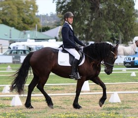 Jeff Merchant on his own fresian cross mare Lady Godiva