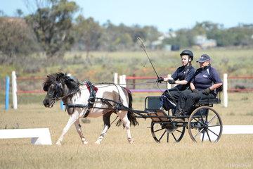 C Farrell driving 'Hemsvale Little Chief'
