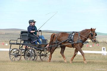 C Farrell driving 'Forestwy Zig Zag'