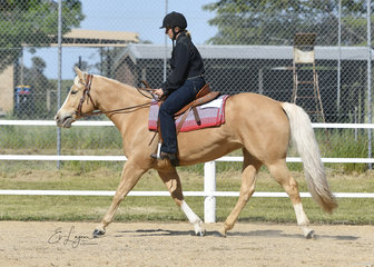 Brumby Lodge Cool Gem, ridden by Sarah Kealey in the Improver Ranch Riding.