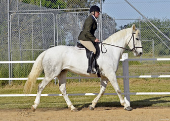 Carmen Harrison and Aramore Summer Lily competing in the Improver Hunter Under Saddle.