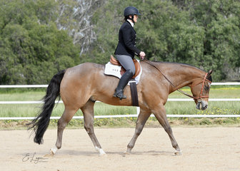 Cassandra Grainger and RQH The Wizard, in the Open Hunt Seat Equitation class.