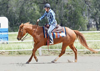 Miss Acres Olena ridden by MIchelle Mulcahy in the Intermediate Ranch Riding.