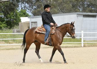 QXH Stylish Lady ridden by Glenn Hurst, in the Intermediate Ranch Riding.