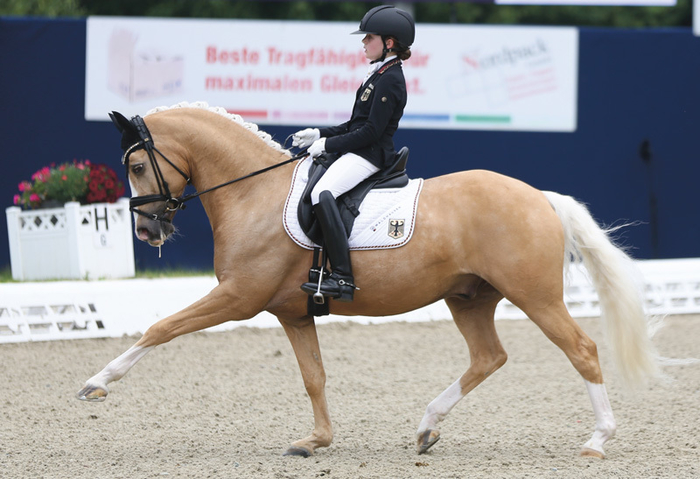 Rose and Daddy Moon at the Future Champions, Hagen. <br> Photo: Pony-Royal.