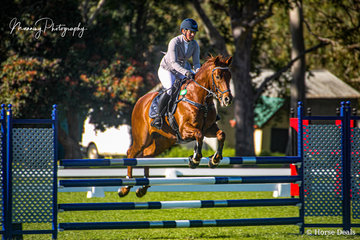 The eye catching stallion 'Levitate' ridden by Kelly Ranford completing her round in the Envirodog Pest Control Open 1.10cm