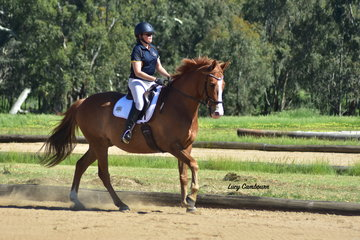 Belinda O'Reilly and MP Cavalier won the Rider Limited Preliminary 1A and 3rd in the CR Preliminary 1B.