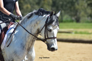 Woranora Sovereign ridden by Willow Ambrose won 1st in the Junior Preliminary 1A and 3rd in the Junior Prep A.