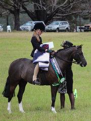 Champion Show Hunter Pony Bordershow Midnight exhibited by Anastasia Blanch