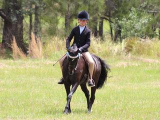 Champion small pony Bordershow Brandy Alexander exhibited by Anastasia Blanch