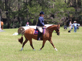 Champion Ridden ANSA Mare Self Portrait exhibted by Madeline McDonald