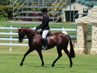 Reserve Champion Galloway Kolbeach Holly's Knowing ridden by Kirsty Harper Purcell