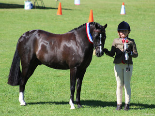 Champion Led Riding Pony SHow Hunter exhibited by Grace Letts