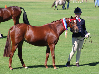 Champion Les APSB Bamborough Chanelle exhibted by Bella Letts