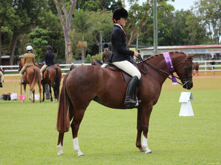 Champion Hunter Galloway Lee Arnes Magestic Rose ridden By Charlee Anthony
