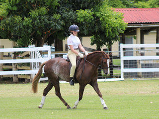 Working out to place in the hunter pony