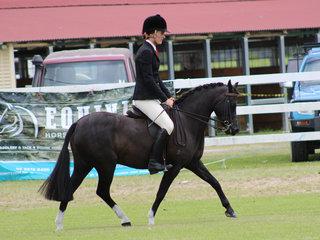Reserve Champion Hunter Pony VL Serendipity ridden by Charlee Anthony
