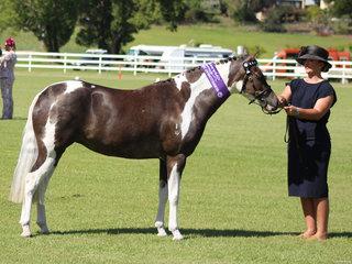 Champion Led Pony Dunelm Catwalk exhibited by Brittney Crosthwaite