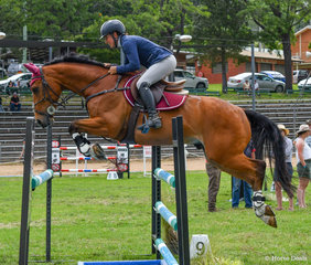 Sarah Dreverman with the consistent Emmaville Van Gogh didn't have a fence down all weekend