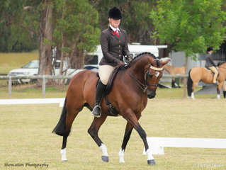 Klaire Thomas is pictured riding her own Braefoot Park Innuendo that claimed Champion Show Hunter Galloway