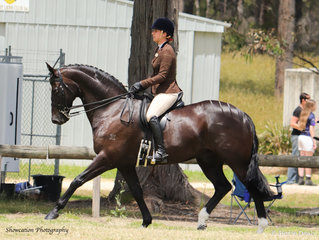 Brooke Wheeler rode her eye-catching Coldstream Ultimate to win Champion Show Hunter Hack and went on to claim Supreme Champion Show Hunter Horse at the Orbost Spring Show