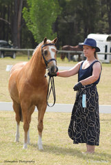 Shari Ryan-Woerz is seen modelling her compulsory Covid-19 accessory as she led Calca Park Aristocrat to win the Led Heavy Weight Hunter