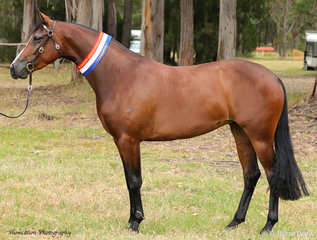 The lovely Nethaway Purple Patch won the Champion Led Registered Horse led by well-known showing competitor Stewie Robinson