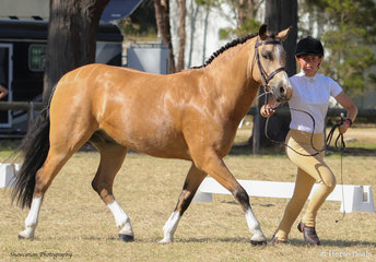 Jess Harrison Led her Hazel Park Puzzle to fourth in the Led Show Hunter Galloway Class