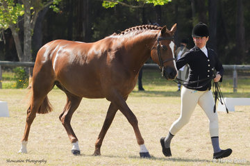 Hillen Voyager is pictured with Kelsey Moon leading as they went on to win the class for Led Show Hunter 15hh and Over