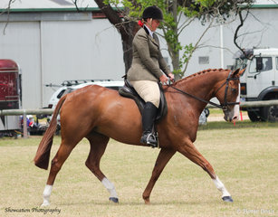 Shae Wishart rode her own Etrebelle to second place in the class Show Hunter Hack 15hh and not over 16hh.