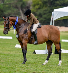 Emma Barkla & Ali Berwick continue to produce stars together with their lovely  Newcomer Hunter Hack mare Antoinette CSH collecting the blue ribbon & a well deserved pat in her first class out. Exciting times ahead im sure ladies.