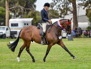Greg Mickan & owners Terry Heythuysen & Edwina Cullens hack Lordz has returned looking a picture of health, claiming both the Ridden Hack & OTT Thoroughbred Championships