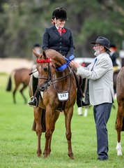The partnership of Briony Randle & owner Judy Ivory continued on their winning ways with their elegant mare KP Simply Exquisite claiming the ridden Galloway over 14.2hh n.e 15hh then going on to claim the championship under judge David Ross