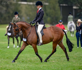 Two years in the making for Ebonie Lee & the Lee families lovely homebred Tamrie Park Prince Charles to step out. He didnt dissapoint and started his showing career in the blue with a win in the Newcomer Hunter Pony over 12.2hh n.e.14hh