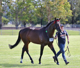 """""""Supercharge"""" was declared Champion led Stallion/Colt, exhibited by Leanne Jones."""