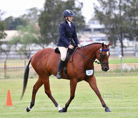 """Champion Racing NSW Rehoming Program Graduate """"Schillacking"""", exhibited by Maddison Cunliffe."""