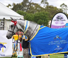 """Winner of the Led Overseas Trained Thoroughbred under 16hh & Reserve Champion Led Overseas Trained Thoroughbred """"Diamond Bit"""" (GB) exhibited by Hillview Thoroughbreds."""