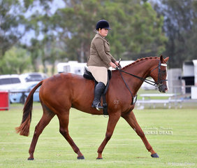 "Third placegetters in the Ridden Veteran Thoroughbred 12-15 years class ""Beaveroo"" and Amanda Williams."