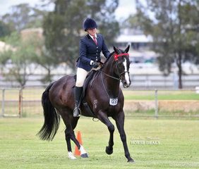 "Molly Shaw's exhibit ""Blakrho"" pictured working out in the Veteran Ridden Thoroughbred 12-15 years of age."