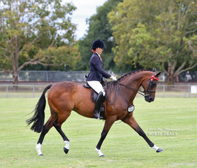 "Showing the strides that won them the Grand Champion Ridden Thoroghbred exhibit sash, Steph O'Connor and ""Hellinacell""."