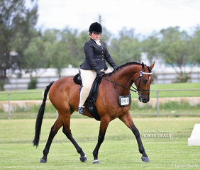 """Photographed during their individual workout in the Open Ridden Show Horse 16-16.2hh class is Bianca-Rose Kurtovic's """"Purple Eclipse""""."""