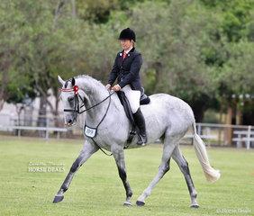 """Second placegetter in the Open Ridden Show Horse 16-16.2hh """"Gillette"""", ridden by LeeAnn Olsen."""