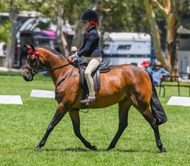 Always smiling no matter the result was Lottie Falchk during her rider class riding Judy Ivory's beautifully bred Merivale Park Living Doll.