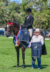 Ali Berwick and Susan Gorsts blue blooded thoroughbred Camelot was raced as The Chairman and today he won newcomer and OTT newcomer open Hack OTT Hack over 15hh then Champion Hack