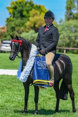 Daniel McNamara rode Emma Richardsons black beauty 'Robbanie Truly Fair by Boy Soprano claimed the Supreme Champion Riding Pony right at the end of todays action, not a bad one to win for her first flowers!