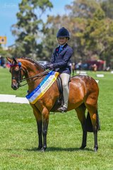 Following on from their success at last weekneds OTB show at Boneo Park was Monica Corstons Yurrugar Supermodel with another championship win today in the riding Pony ring.